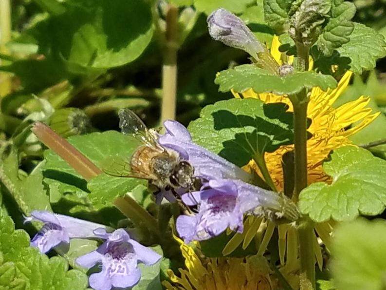 Vicki pollinator 2